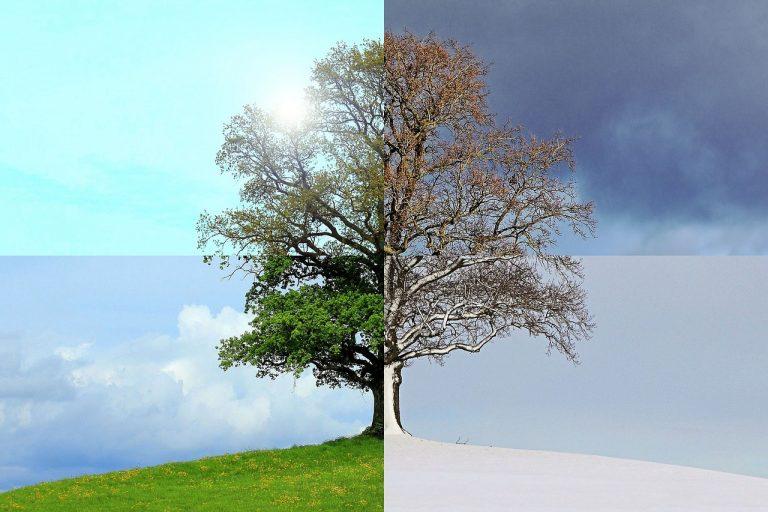 Le cycle de la vie dans les saisons